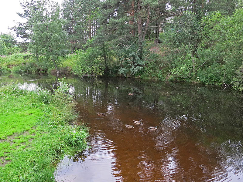 Речка в парке Медвежьегорска