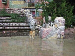 Котики на набережной в Одессе