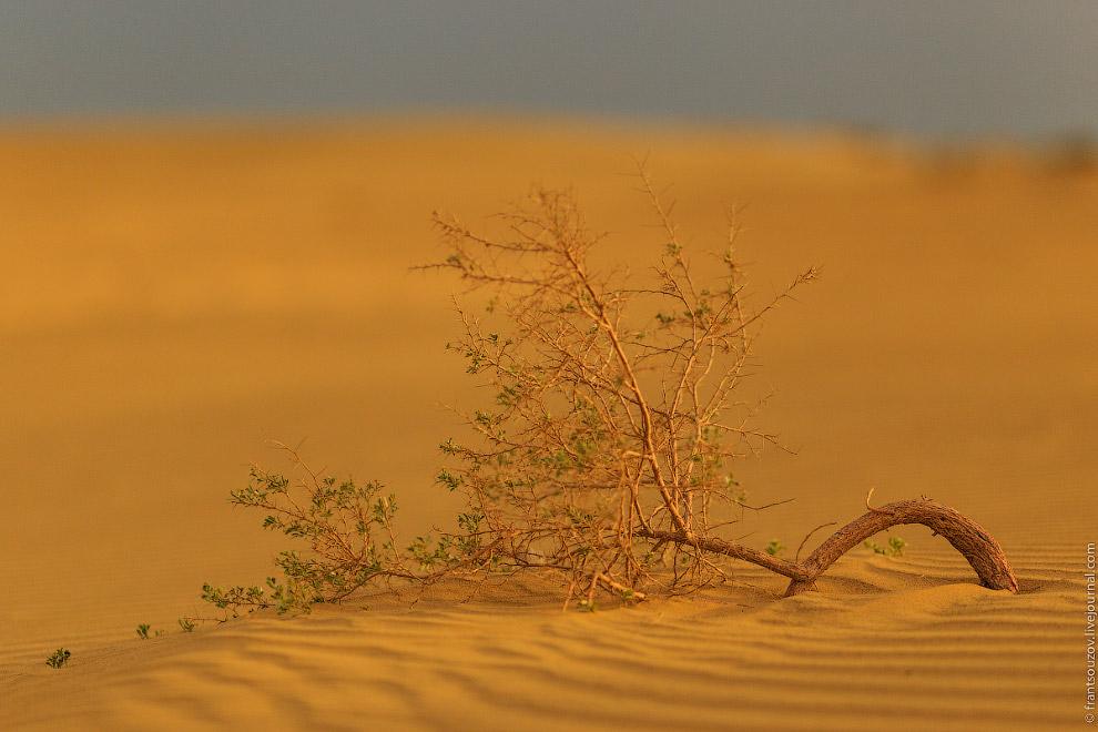 19. Лэнд Ровер — невероятно фотогеничная машина. Особенно среди песков. Особенно в исполнении «