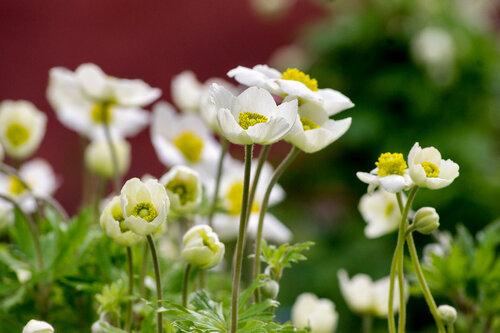 Весенние цветы