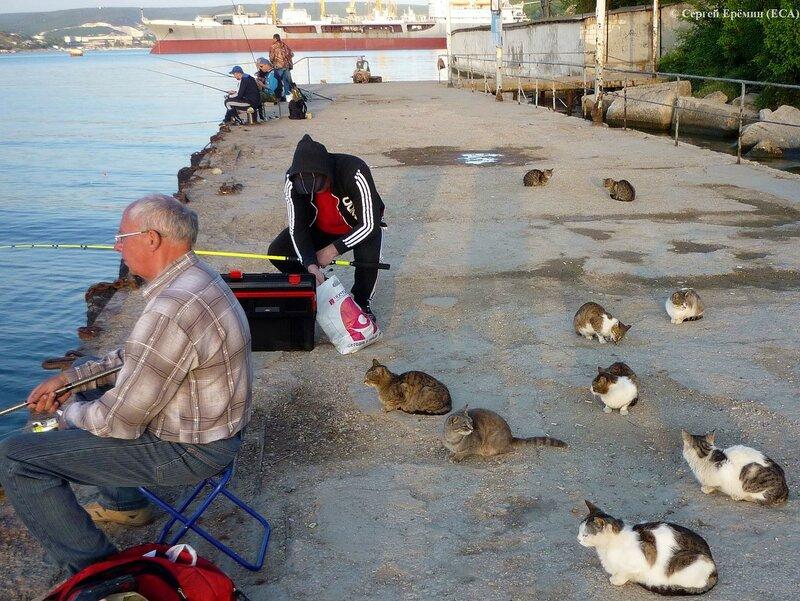 Рыбаки и кошки на причале Троицкой бухты