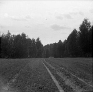 1904. Томилино. Дорога с горы против солнца. Березняк