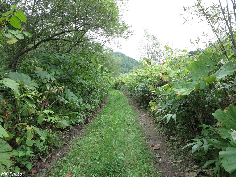 Дорога по насыпи