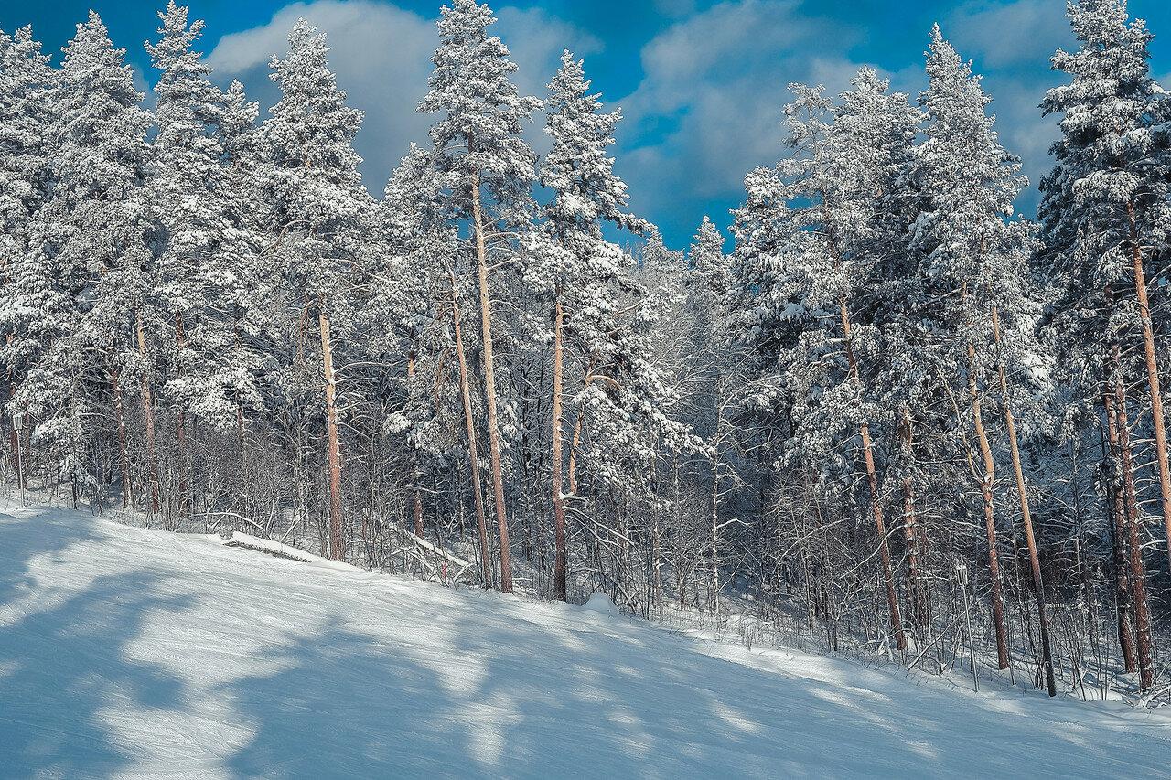 Зимний лес в Мраткино