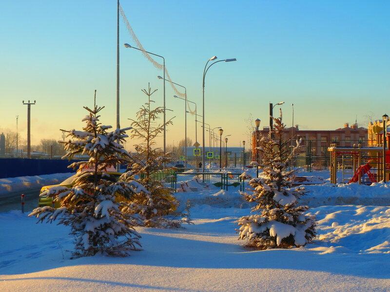 Юг поля январь 17г 023.JPG
