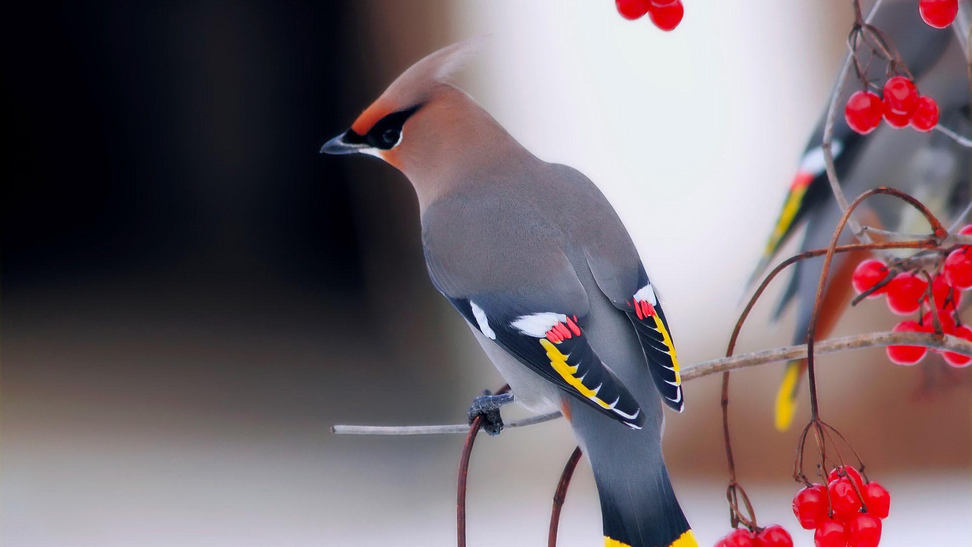 Яскрава птах