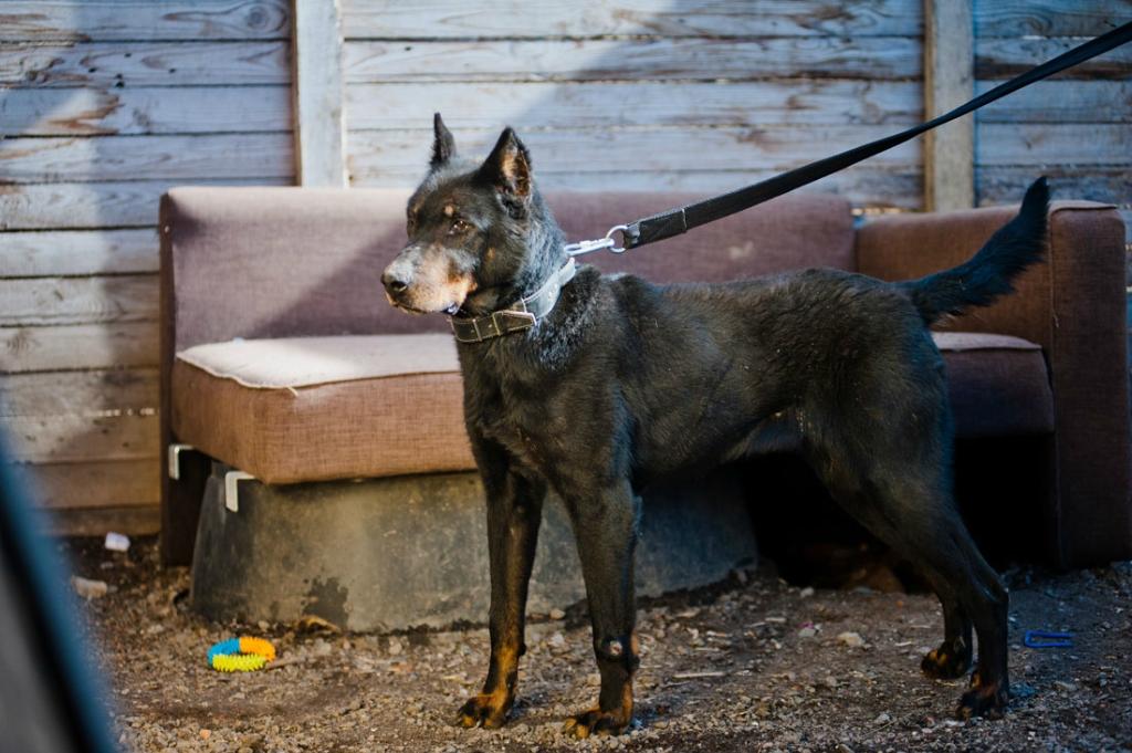 Зара собака из приюта догпорт
