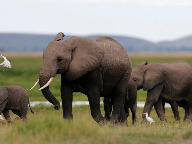Слоны — 500 смертей в год Слоны также несут ответственность за ежегодную гибель людей — в статье Nat