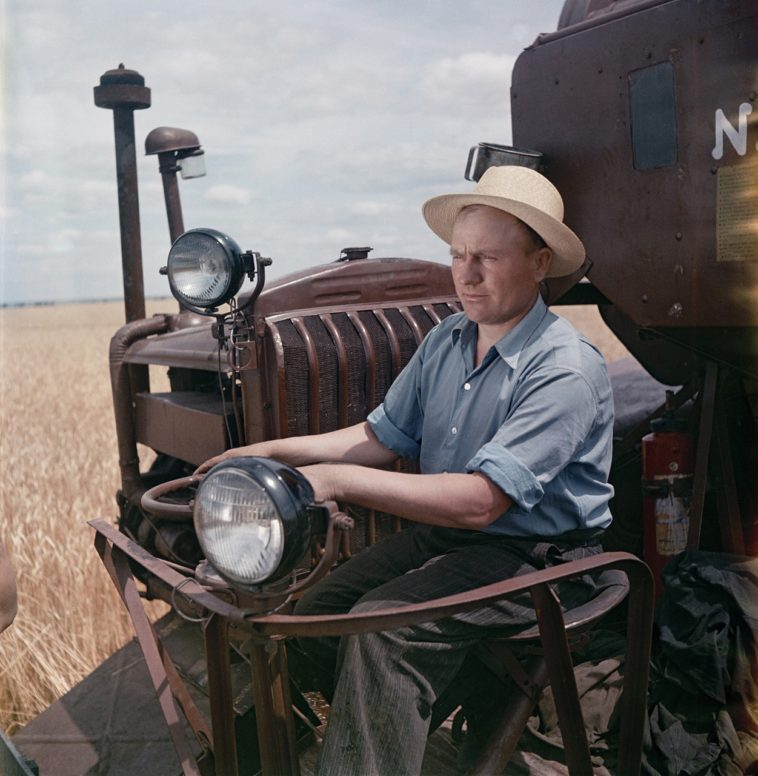 Сбор урожая пшеницы.