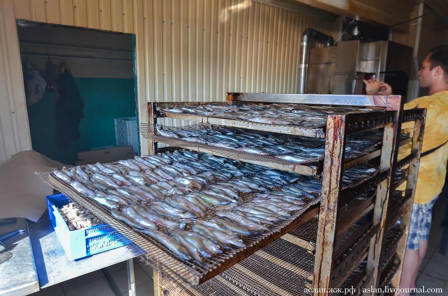 69. И отправились на завод, где перерабатывается рыба, выращенная в Онеге. Здесь ее солят.