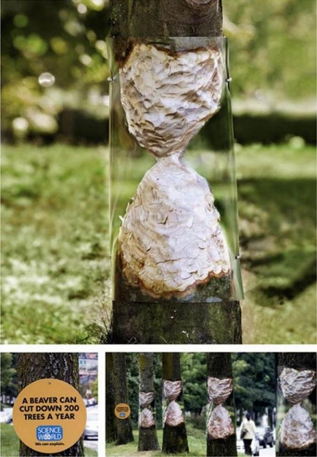 «Мир науки» (Science World) сообщает, что бобры могут сгрызать додвухсот деревьев вгод. Агентство