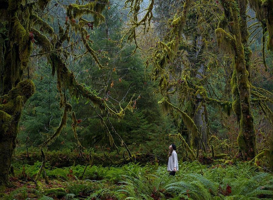 2. Национальный парк США, расположенный на северо-западе штата Вашингтон.