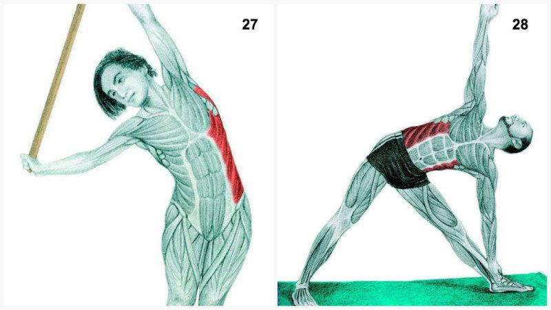 28. Поза Треугольник: растяжкавнешних косых мышц.29. Растяжка грудных мышц с упором на стену.<b