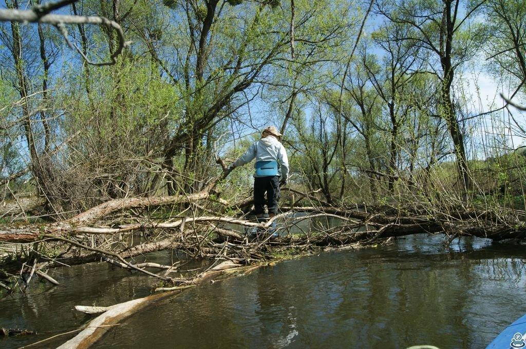 Упавшие деревья в русле Боромли