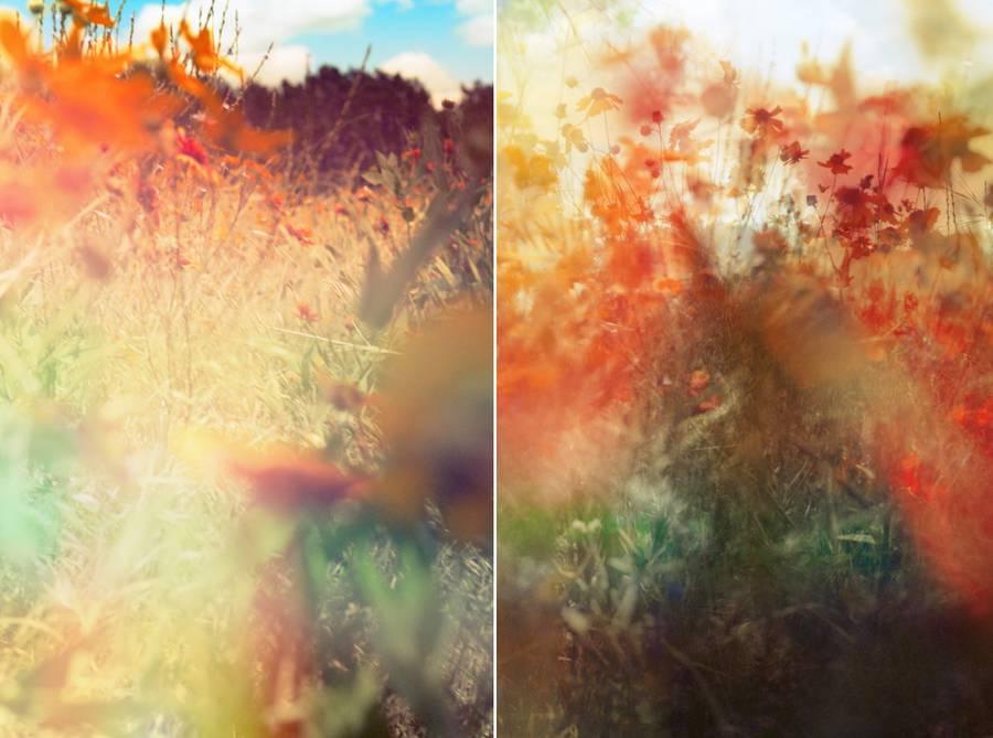 Field of Wildflowers Photography by Jordan Sullivan (23 pics)