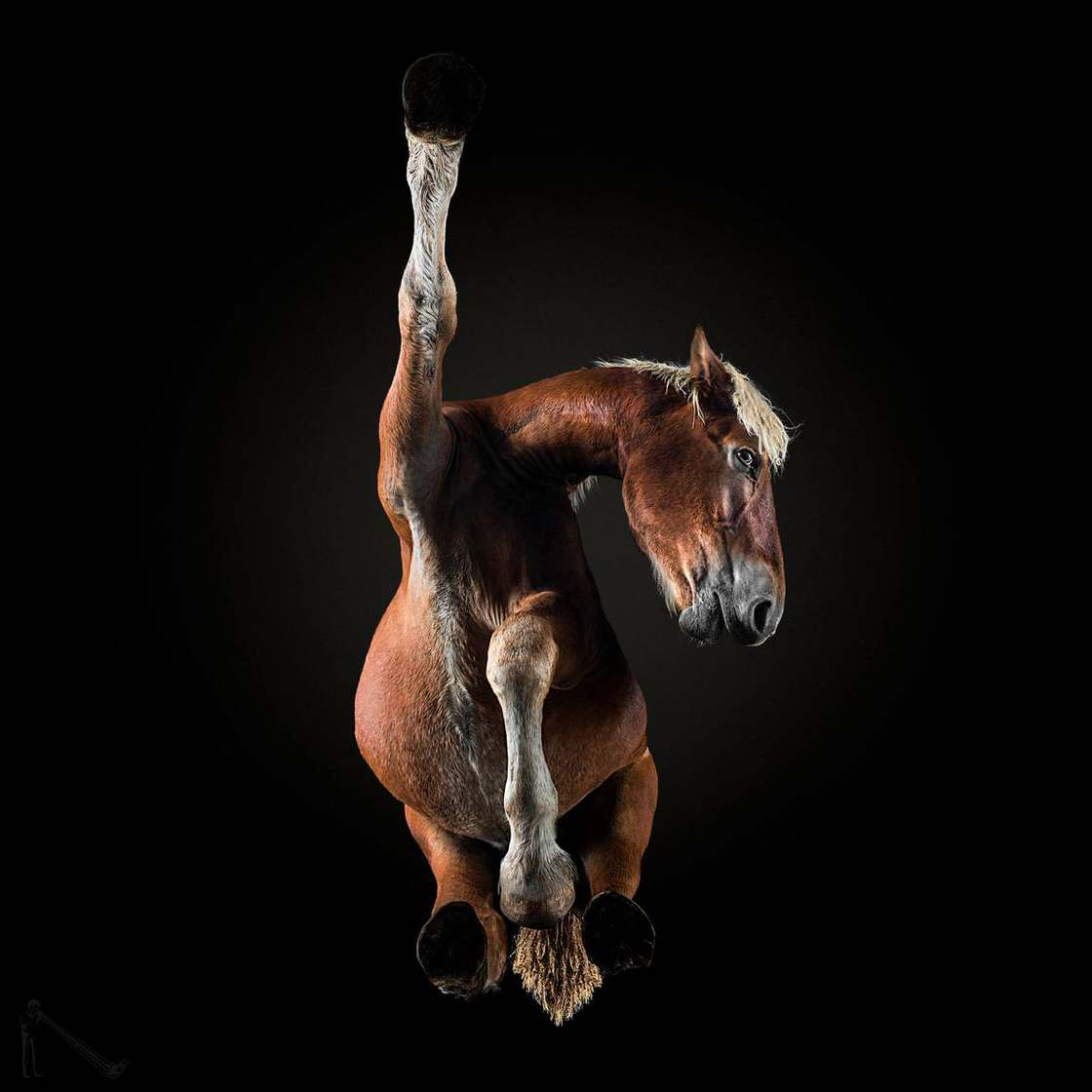 Beautiful Pictures of Horses From the Bottom