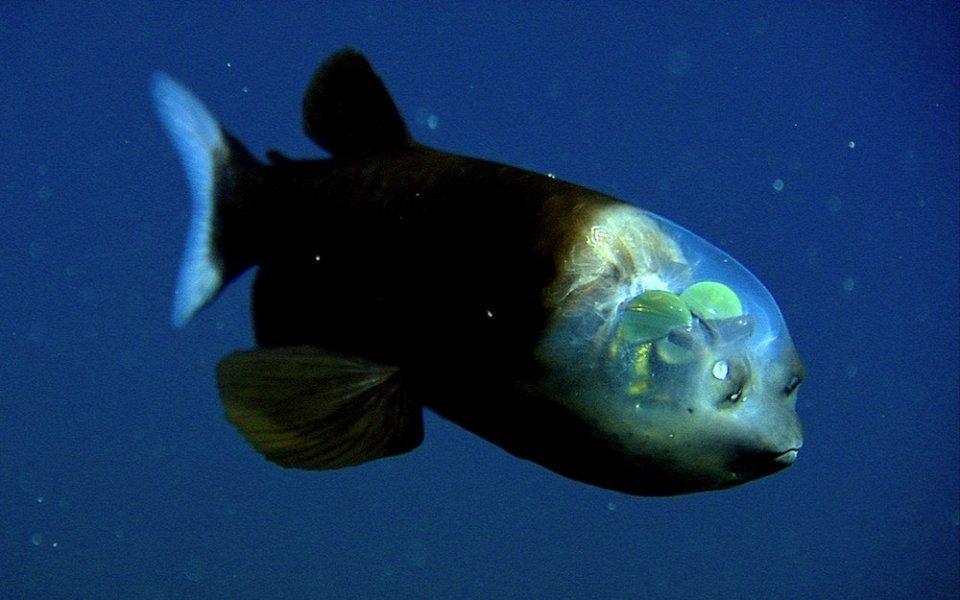Самые странные обитатели океана