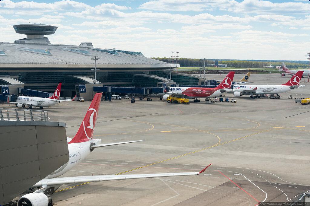 В этом году рекордсмен среди иностранных авиакомпаний —Turkish Airlines