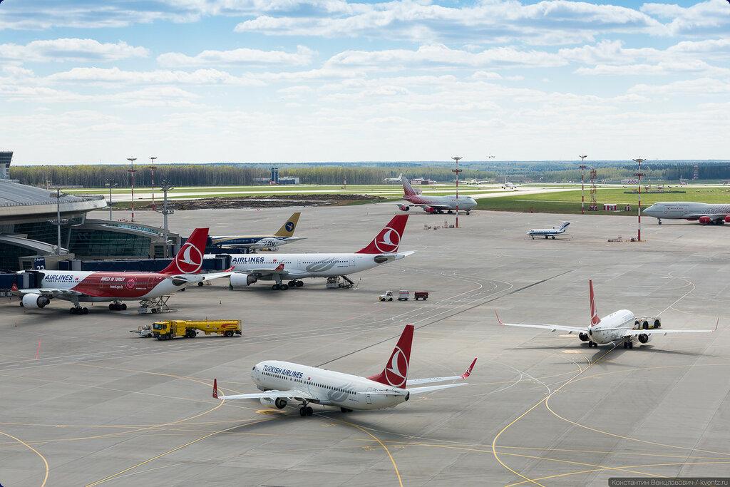 Пять бортов Turkish Airlines на перроне и это не предел
