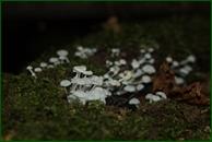 http://img-fotki.yandex.ru/get/44951/15842935.37a/0_eaa2c_e75bce64_orig.jpg