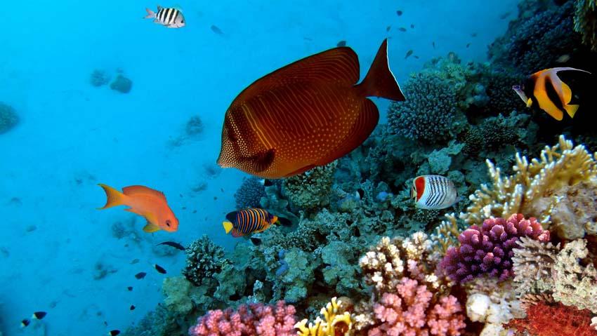 Подводный Мир Обои рабочий стол