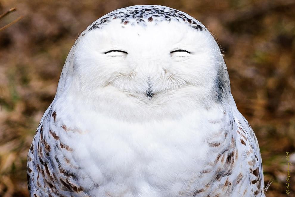 7. Еще не понял что к чему. (Фото Chrys Mellor   Barcroft Images   Comedy Wildlife Photo Awards