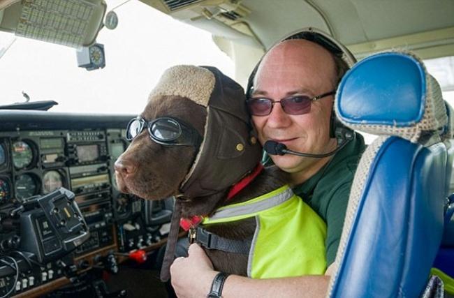Уэтой собаки покличке Келли есть официальная лицензия науправление самолетом вкачестве втор