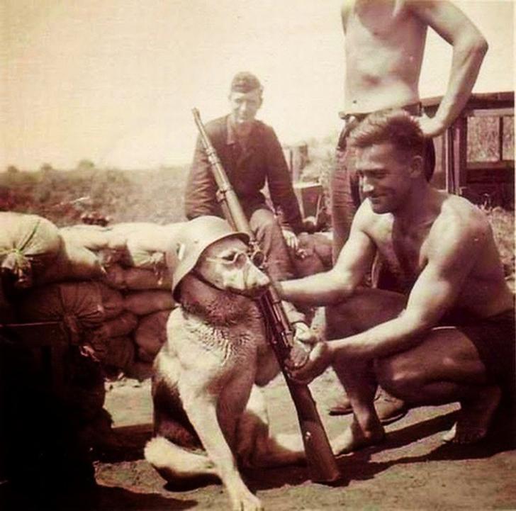 Немецкие солдаты фотографируют собаку в 1940 году.