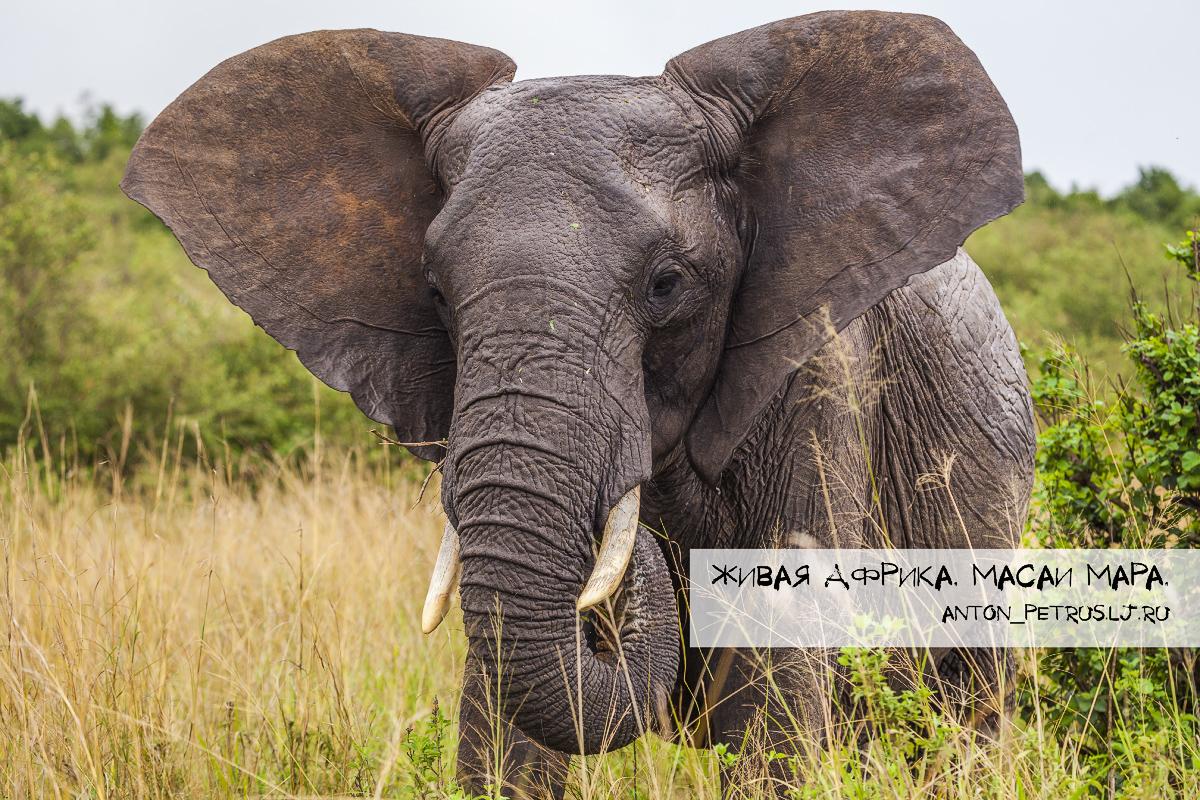 Живая Африка. Парк Масаи Мара (22 фото)