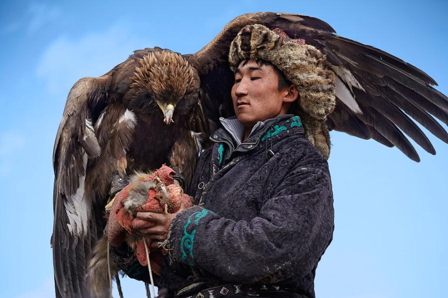 13. По окончанию охоты птица вознаграждается за хорошую работу самой ценной частью добычи.