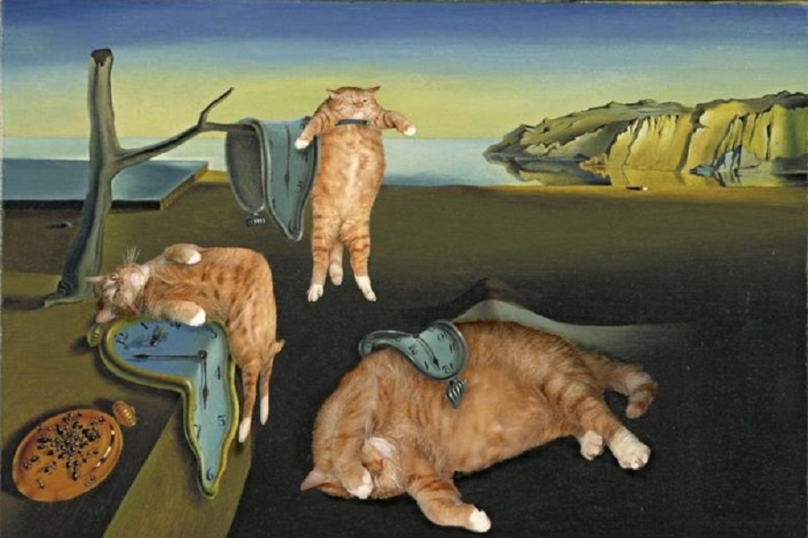 Кот по имени Заратустра и другое