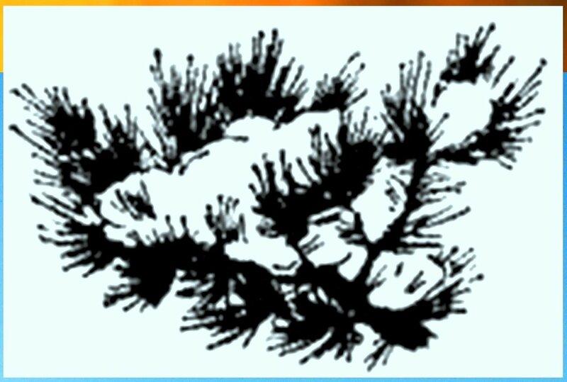 Иллюстрация к книге В.К.Арсеньева Дерсу Узала (26).jpg