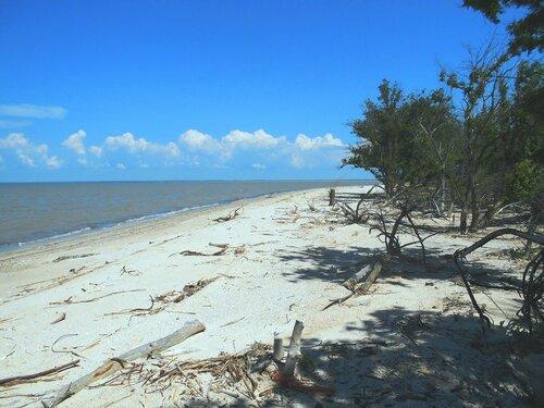 В тени, у моря ... DSCN5742.JPG