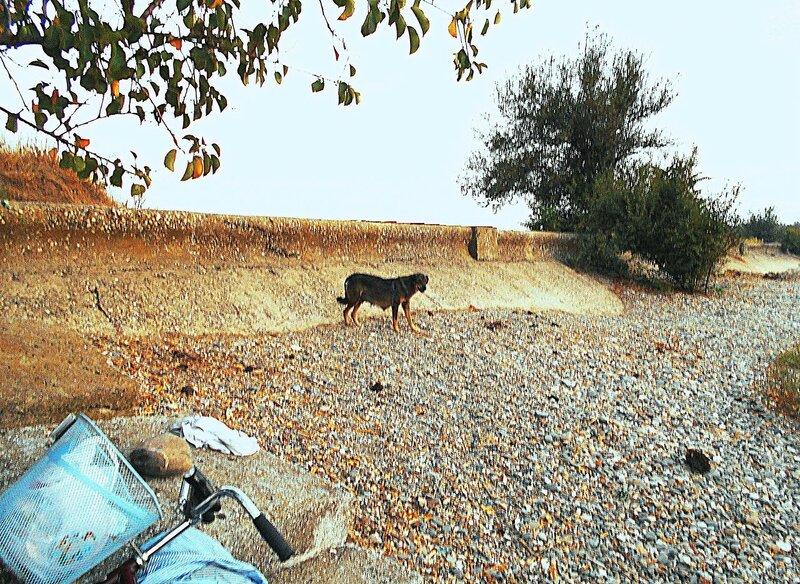 Собака в отдалении ... DSCN1306.JPG