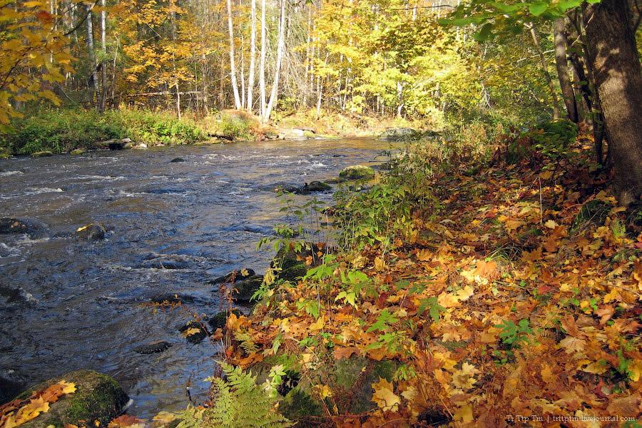 1. Золотая осень на Карельском перешейке.