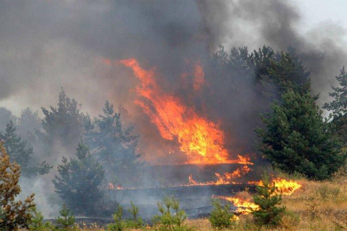 Срочное сообщение ГАИ вблизи трассы Минск- Могилев горит лес- движение ограничено