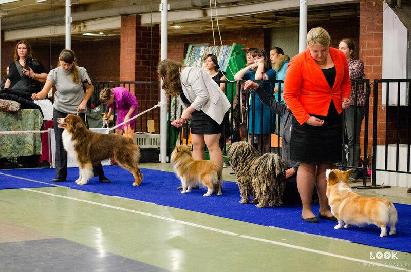 Выставочные успехи наших собак - 5 - Страница 30 0_afc09_50797ca2_XL