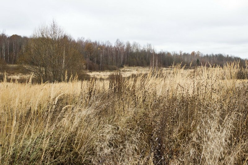 полевая трава в ноябре