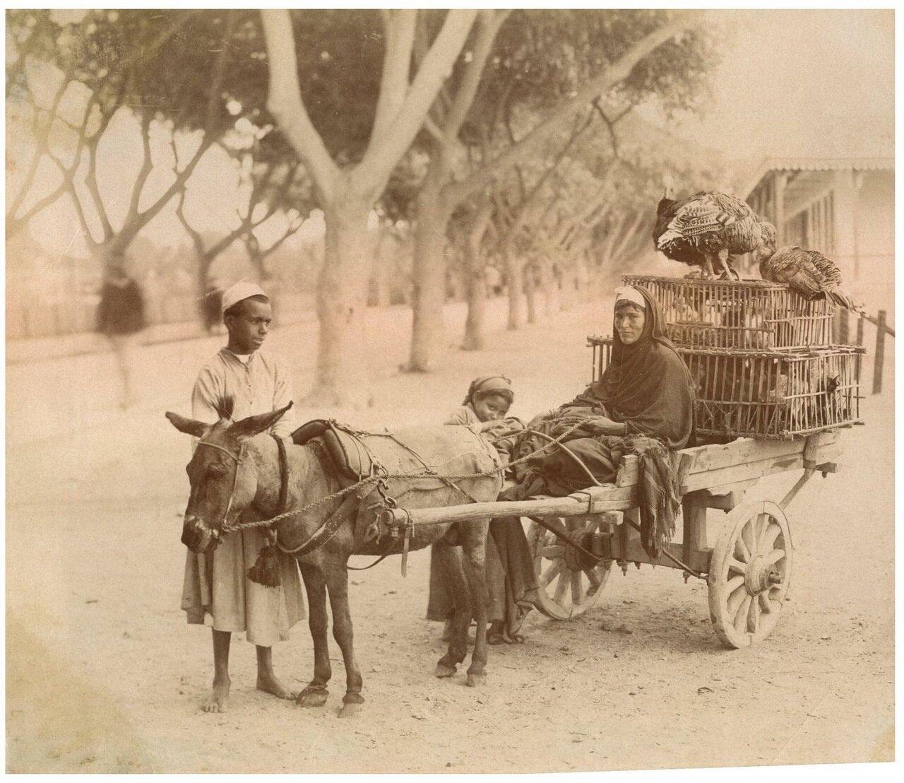 Торговка фазанами