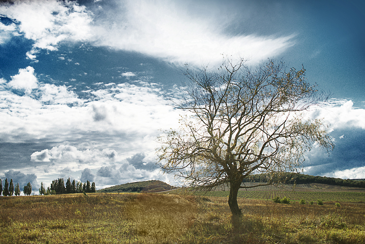 фотограф Кузьмин. фотографии природы Краснодара