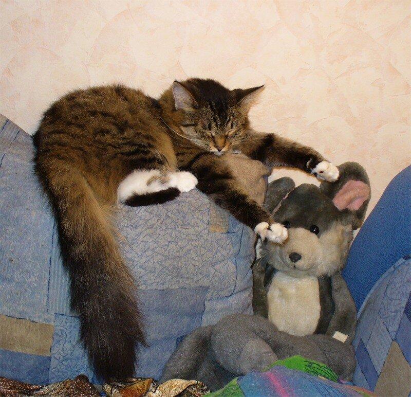 Дуся спит, август 2010