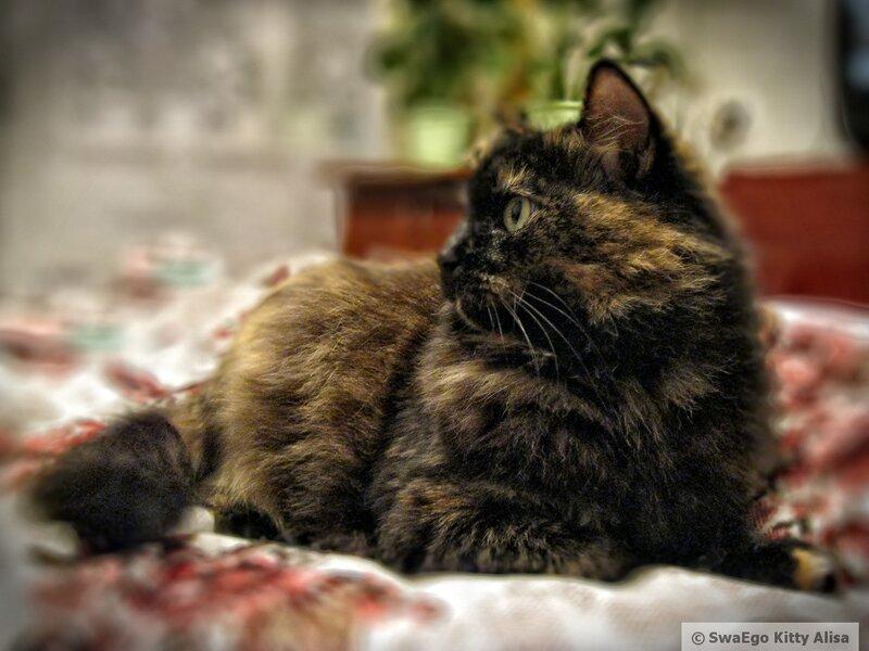 Kitty Алиса