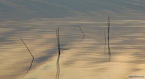 Пересекающиеся линии (волна, линия, отражение)