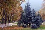 Осенняя изморозь