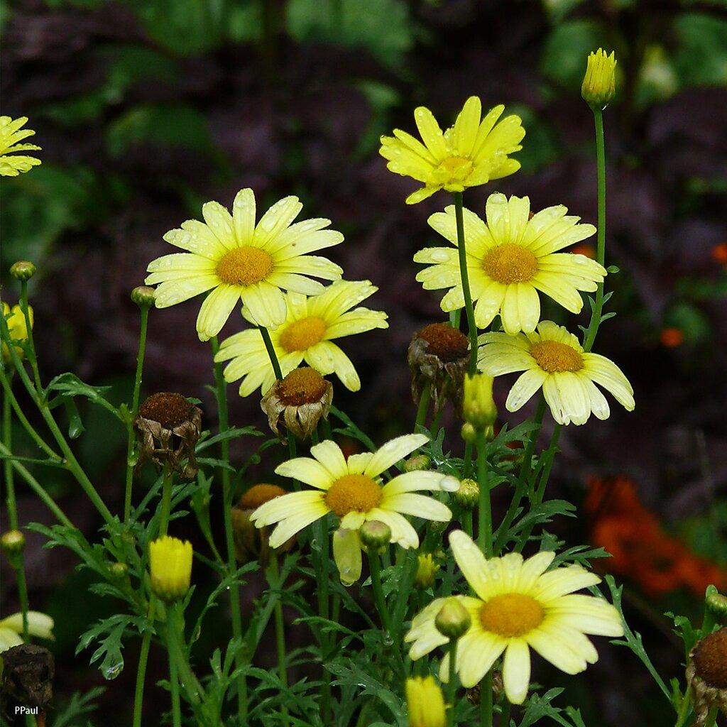 цветы осени...