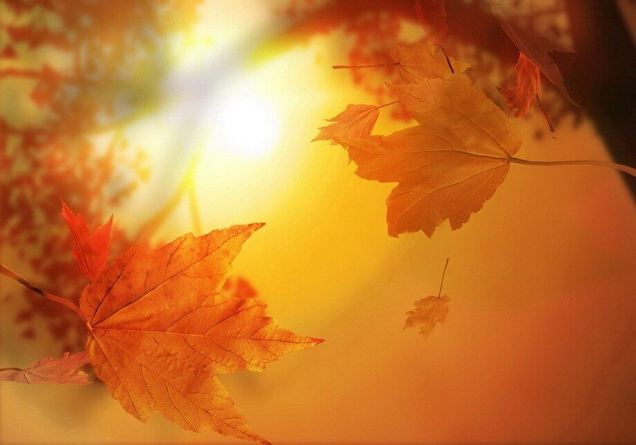 падающие листочки, солнечные лучи, кленовые листики.
