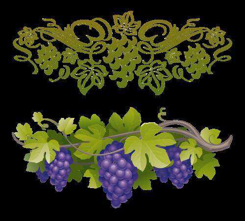 виноград (35).png