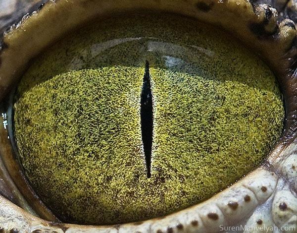 Сурен Манвесян. Фотографии глаз животных крупным 0 122fbd 41ee50e8 orig