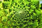 Фрактал брокколи Romanesco, различная форма цветной капусты.