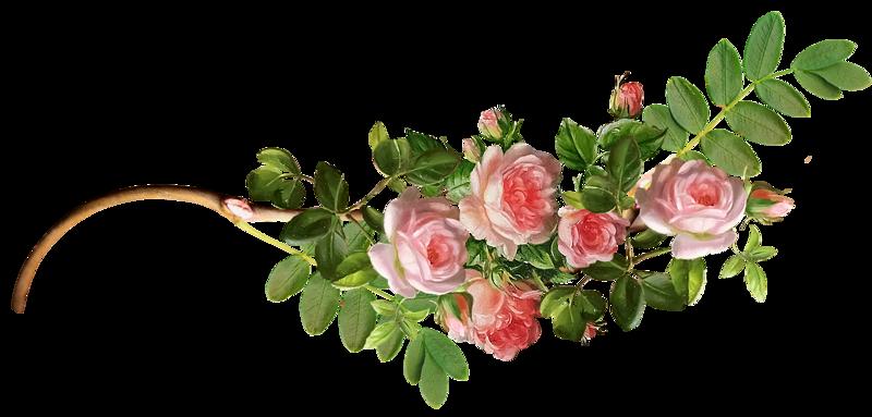 """Résultat de recherche d'images pour """"séparateur de texte roses"""""""